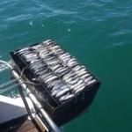 Яхта Александра рыбалка2
